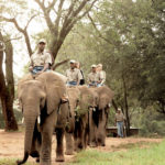 Nearby Attractions | Thyme inn on Greenway Woods Resort White River - Elephant Whispers